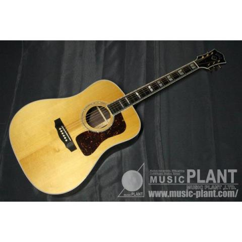 GUILDD-55 NAT